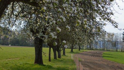 Frühling am Haslauer-Hof